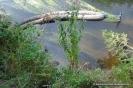 100813 Min. forurening-Oliefilm på vand, Ryå ved Manna