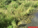 160730 Str. forurening-Gylleudslip,Holtevej, Serritslev